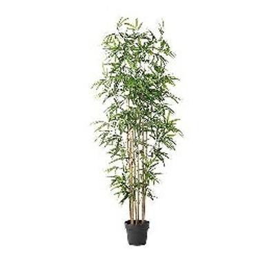 Bambus / Pflanze / Kunstpflanze / Dekopflanze